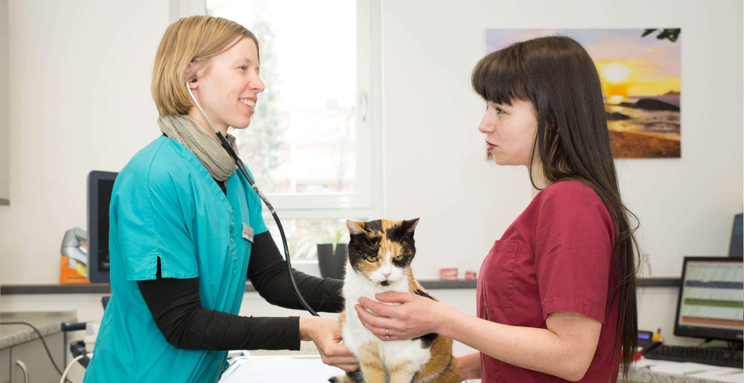 Tierarzt Untersuchung